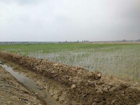 稻田排水沟