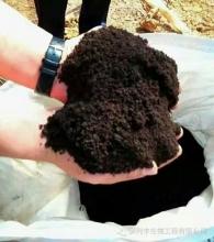 有机肥发酵